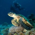 six senses laamu sea turtle adventure diving maldives uniqluxe flip n flop escape