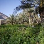 organic garden Zighy Bay Oman Uniq Luxe Uniqluxe Luxury Travel Holiday Retreat Six Senses