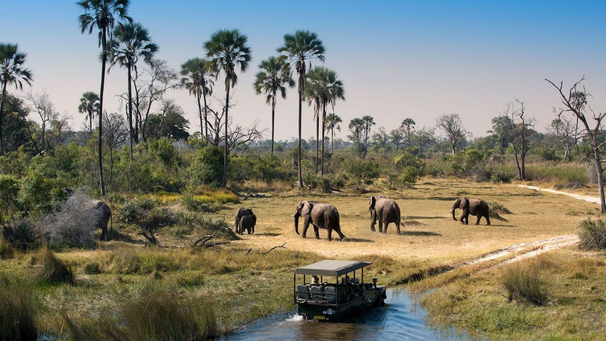 sighting of a herd of elephants walking across the field past a jeep during game drive