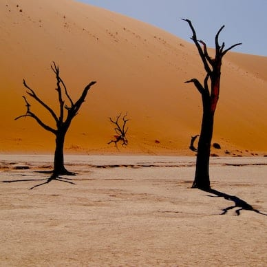 A wide salt pan awaits in Deadvlei, Namibia with dead trees standing proudly in the heat