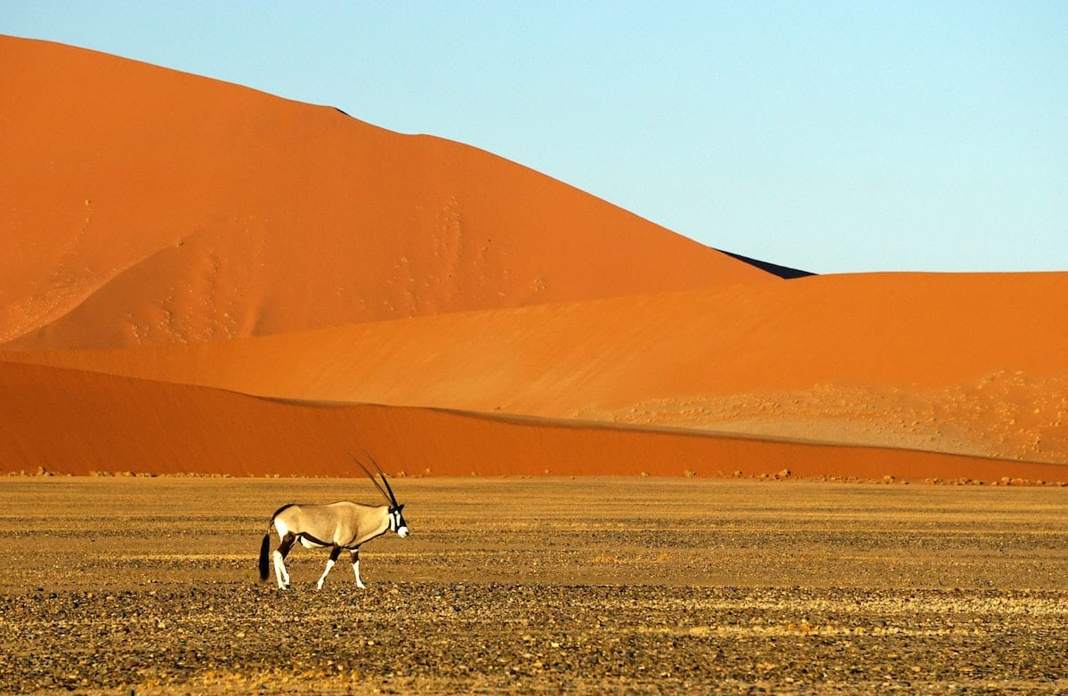 https://uluxeimages.uniqluxe.com/2020/06/uniq-luxe-oryx-in-namib-naukluft-national-park-namibia-africa.jpg