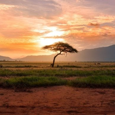 A lone tree under the warm African sun