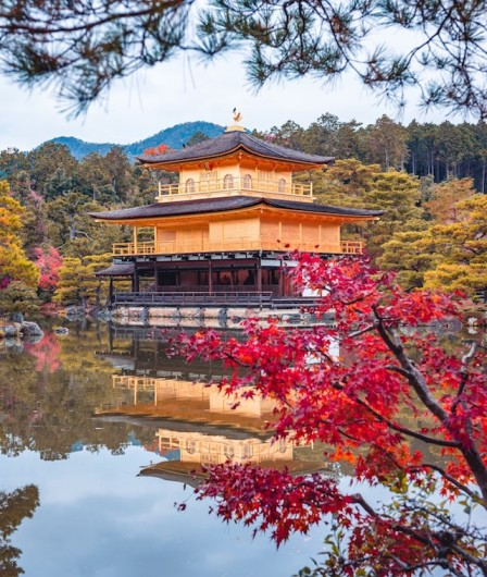 The famous gold temple, Kinkakuji, surrounded by a spectacular red foliage of autumn leaves