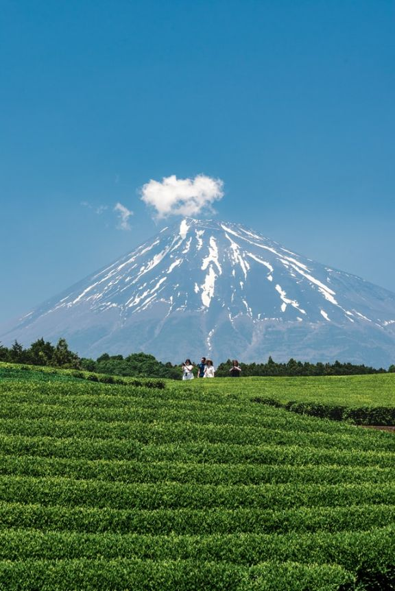 A group of four touring the Japanese tea fields with the majestic Mount Fuji in the scenic summer